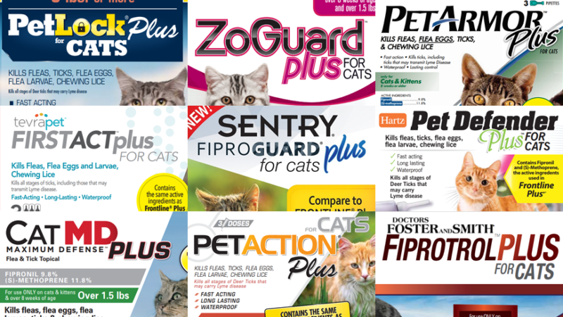 Generic Alternatives to Frontline Plus for Cats