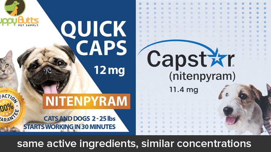 Generic Alternatives To Capstar For Dogs And Cats Fleascience